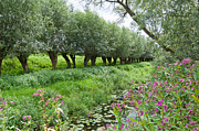 Natuur Photos - Willows in a row by Ruud Morijn
