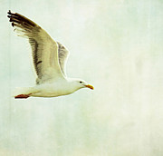 Flying Seagull Art - Wind Beneath My Wings by Rebecca Cozart