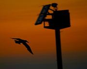Amazing Sunset Prints - Wind Beneath My Wings Print by Robert Harmon