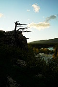 Many Glacier Photos - Wind Blown Tree At Many Glacier by Jeff  Swan