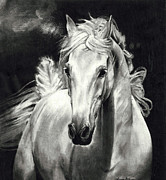 Wild Horse Drawings - Wind Horse by Vanessa Anderson