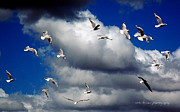 Grey Clouds Posters - Wind Sailing Seagulls Poster by Vicki Ferrari