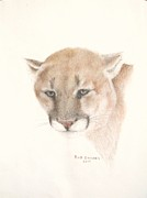 Puma Pastels - Wind Shadow by Bud  Barnes