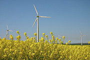 Vibrant Metal Prints - Wind Turbines Across A Field Of Flowering Oilseed Rape (brassica Napus) Metal Print by Maria Jauregui Ponte