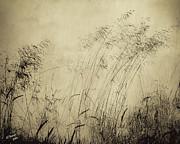 Windblown Print by Arne Hansen