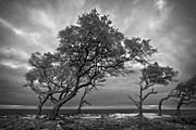 Silhouettes Metal Prints - Windblown Metal Print by Debra and Dave Vanderlaan