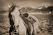 Cowboys Prints - Windblown Print by Megan Chambers