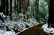 Winter Landscapes Digital Art Metal Prints - Winding forest trail in winter snow Metal Print by Phill Petrovic