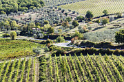 Grape Vines Photos - Winding Road by Jeremy Woodhouse