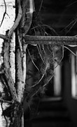 Decayed Barn Framed Prints - Window and Vine Framed Print by Amanda Norman-Campbell
