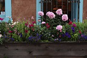 Sherry Davis Posters - Window-box Flowers  Poster by Sherry Davis