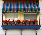 Red Geraniums Photo Prints - Window Box Geraniums Print by Colleen Kammerer