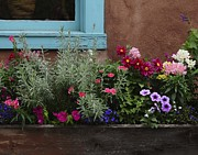 Sherry Davis Posters - Window-box II Poster by Sherry Davis