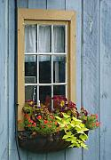 Basket Framed Prints - Window Flower Basket Framed Print by Lori Seaman