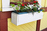 Window Box Prints - Window Flower Box Print by Thomas R Fletcher