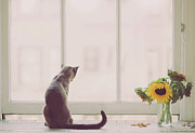 Cat Prints - Window In Summer Print by Cindy Loughridge