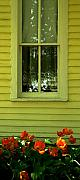 Huisken Prints - Window Print by Lyle  Huisken