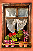 Flowerpot Posters - Window Poster by Okan YILMAZ