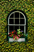 Window On An Ivy Covered Wall Print by Bill Cannon
