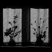 Lilli Prints - Window Shadow 2 Print by Aldo Cervato