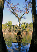 Caddo Framed Prints - Window to Caddo Lake Framed Print by Gayle Johnson