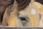 Horse Pastels Metal Prints - Window to the Soul Metal Print by Nichole Taylor