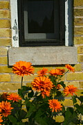 Framing Posters - Window With Flowers Poster by Elizabeth Ericson