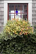 Krauzyk Posters - Windowbox - Nantucket Poster by Henry Krauzyk