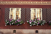 Flower Motifs Prints - Windows flower Print by Ioan Todor