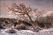 Peach And White Prints - Windswept at Driftwood Beach Print by Debra and Dave Vanderlaan