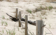 Dunes Prints - Windswept Beach Fence Cape Cod Massachusetts Print by Michelle Wiarda