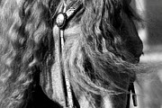 Gray Horses Photos - Windswept by Laurel Sherman