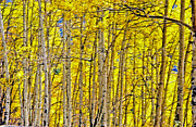 Yellow Leaves Digital Art Prints - Windy Aspen Print by James Steele