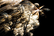 Pyrotechnics Photo Prints - Windy Fireworks Print by Gert Lavsen