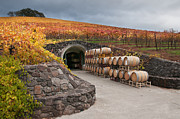 Grapevines Photos - Wine Barrels and the Cave by Kent Sorensen