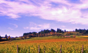 Grapevines Photos - Wine Country by Margaret Hood