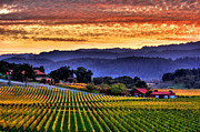 Sunset Art Posters - Wine Country Poster by Mars Lasar
