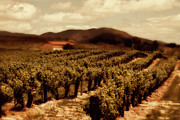 Vineyards Photo Posters - Wine Country Poster by Peter Tellone