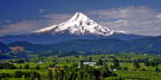 Mount Hood Oregon Posters - Wine Country Poster by Scott Mahon