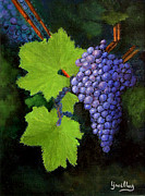Pinot Posters - Wine Grapes Poster by Barbara Willey