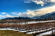 Lake Chelan Prints - Wine Vision Print by Spencer McDonald