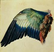 Feather Framed Prints - Wing of a Blue Roller Framed Print by Albrecht Durer