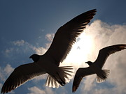 Seagull Metal Prints - Wings For Shade Metal Print by James Granberry
