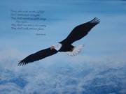 Eagle Paintings - Wings like eagles by Cindy Rae