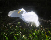 Everglades Digital Art - Wings of an Angel by David Lee Thompson