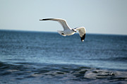 Flying Seagull Art - Wings Over the Water by Suzanne Gaff