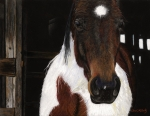 Horse Pastels Framed Prints - Winner Framed Print by Carol McCarty