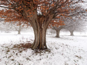 Russet Prints - Winter at Hatfield Forest Print by John Perriment