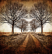 Lane Photo Prints - Winter Avenue Print by Meirion Matthias