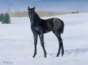 Colt Paintings - Winter Baby by Linda Tenukas